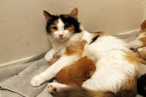 kittens 003