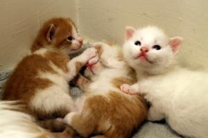 kittens 008